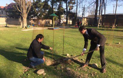Акция «Посади дерево» прошла в с. Гапцах